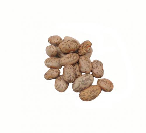 Bean, Pinto Dried