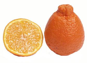Citrus, Tangelo