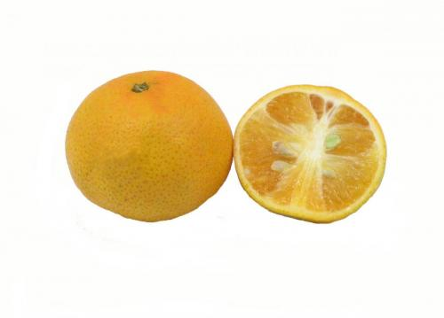 Citrus, Tangerine