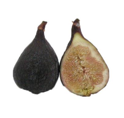 Fig, Black Mission