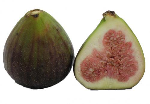 Fig, Brown Turkey 1