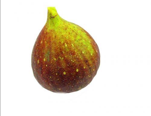 Fig, Brown Turkey 2