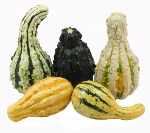 Gourds 2