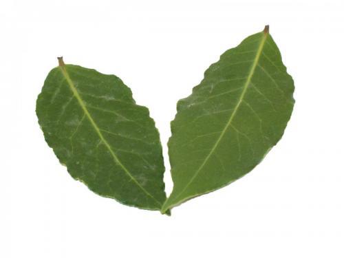 Herbs, Bay Leaves