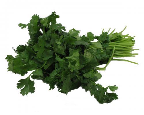 Herbs, Cilantro