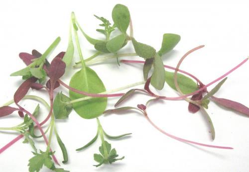 Herbs, Citris Mix, Micro
