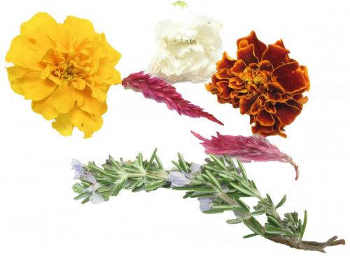 Herbs, Edible Flowers, Mixed