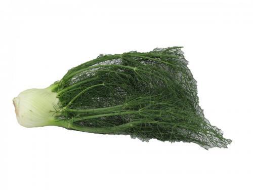 Herbs, Fennel