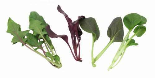 Herbs, Fusion Mix, Mini Crown