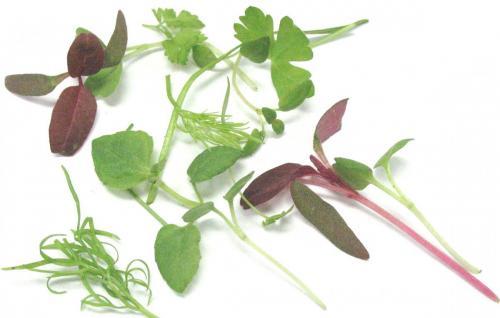 Herbs, Herb Mix, Micro