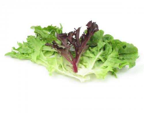 Lettuce, Artisan Blend 1