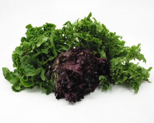 Lettuce, Artisan Blend 2