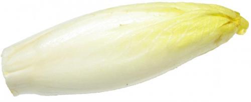 Lettuce, Endive Belgian