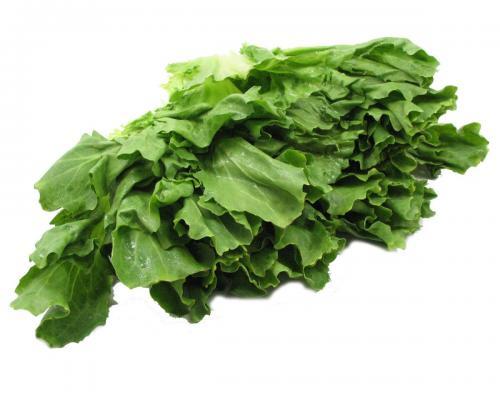 Lettuce, Escarole