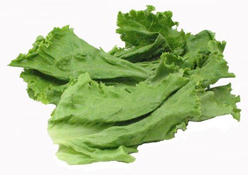 Lettuce, Green Leaf Fillets