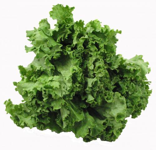Lettuce, Green Leaf