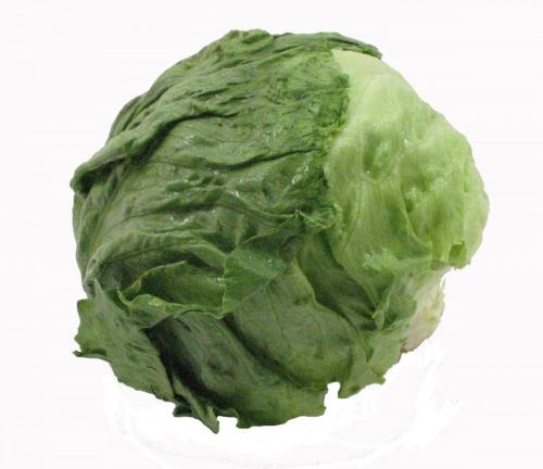 Lettuce, Iceburg