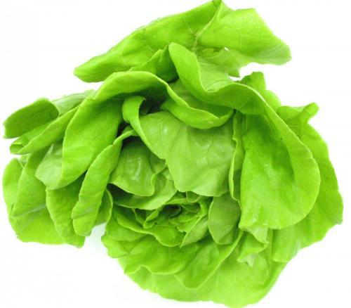 Lettuce, Living