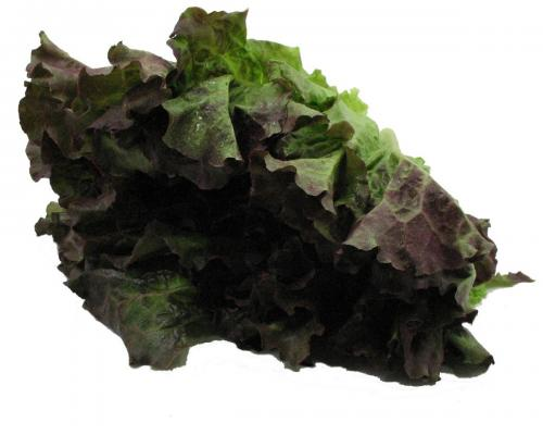 Lettuce, Red Leaf