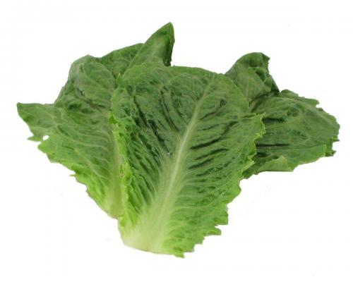 Lettuce, Romaine Fillets