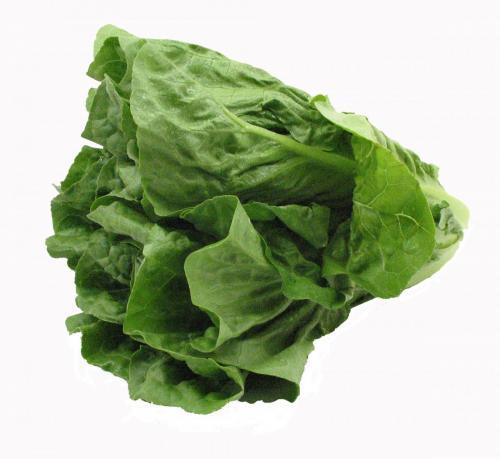 Lettuce, Romaine