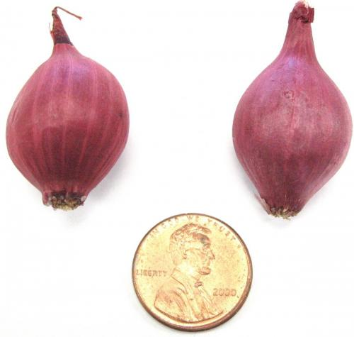 Onions, Red Pearl