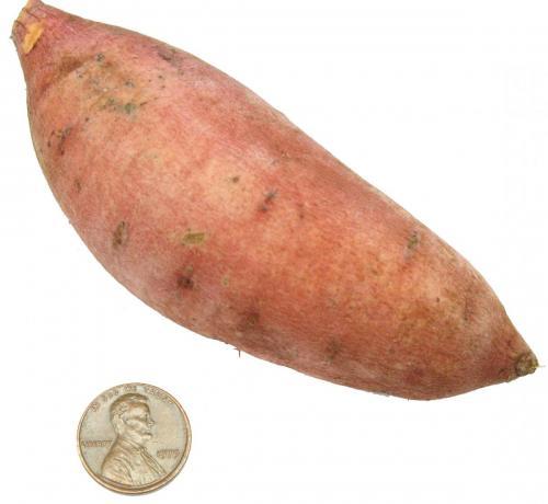 Potato, Baby Sweet