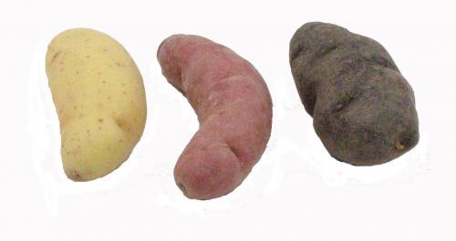 Potato, Fingerling, Mixed