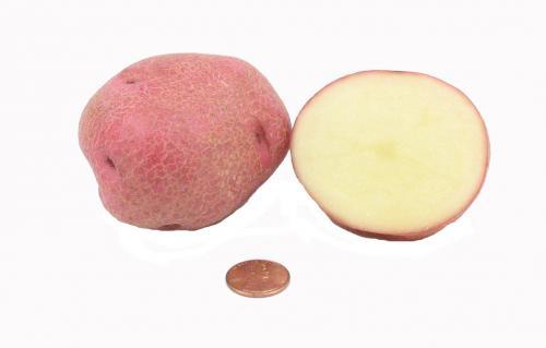 Potato, Red B