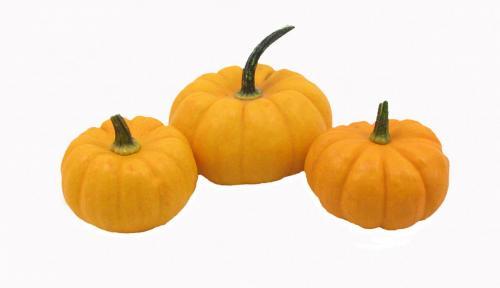 Pumpkin, Miniature, Triple