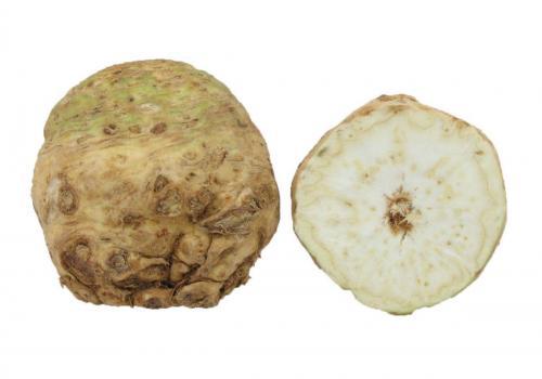 Root, Celery