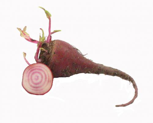 Roots, Beets, Baby Striped
