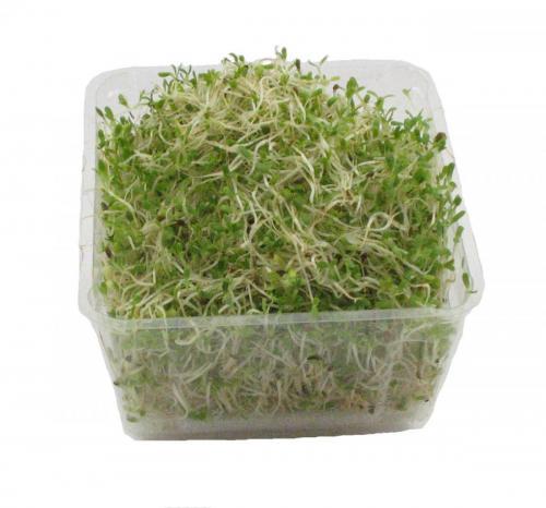 Sprouts, Alfalfa
