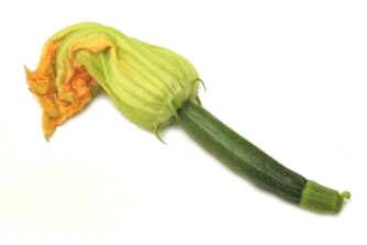 Squash, Blossom 1