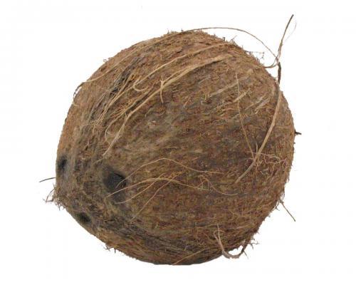 Tropical, Coconut